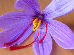 Amplia flor de Azafrán