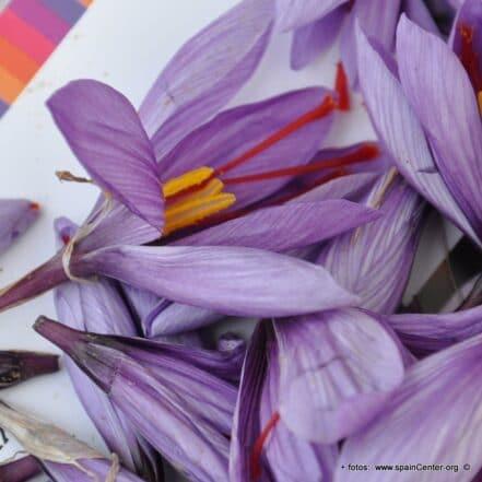 Flor seca de Azafrán