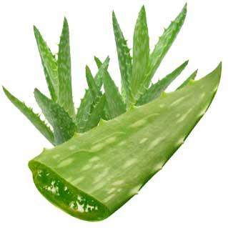 Aloe-1150