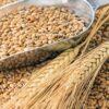 trigo picado -0