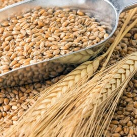 trigo picado